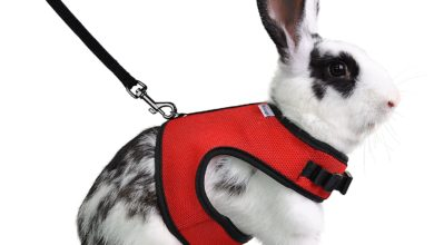Photo of Top 10 Best Rabbit Harnesses in 2021 – Reviews
